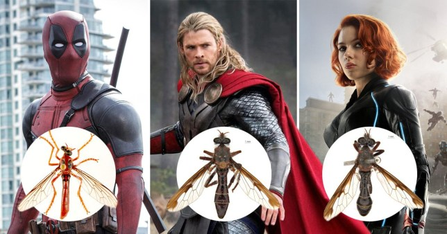 They may only be flies, but they've got superhero names (Twentieth Century Fox; Marvel; Reuters)