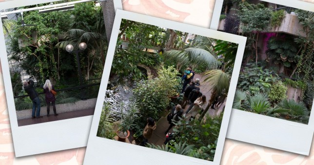 The Barbican plant conservatory on polaroid pictures