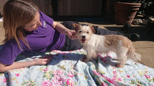 Dora the dog rescued and rehabbed