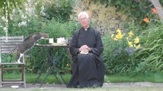 Dean of Canterbury's cat causing more chaos during virtual sermon