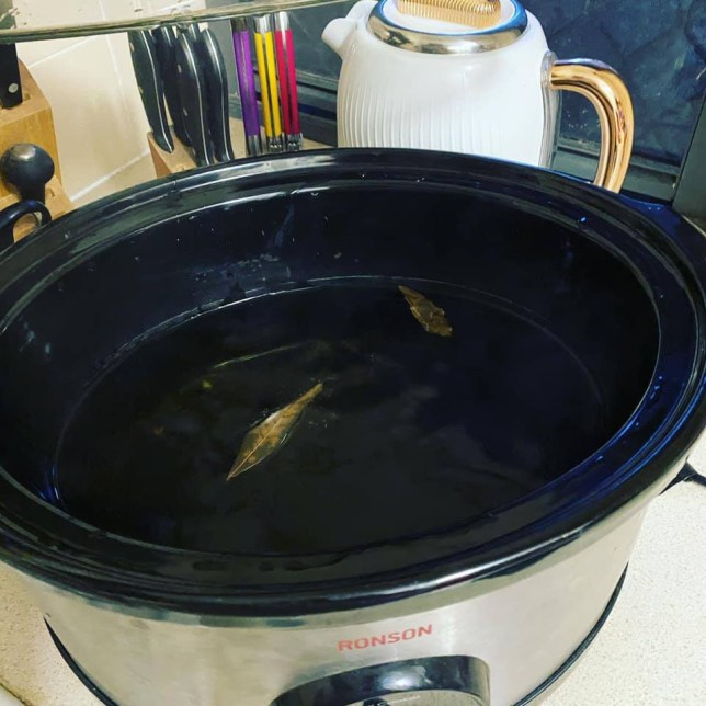 This is 2020 in a dish': Mum's hilarious epic fail after forgetting to add meat and cooking nothing but a bay leaf in her slow cooker for EIGHT HOURS