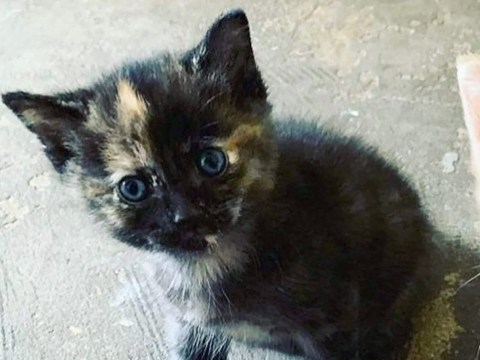 Kitten's decapitated body dumped outside family home 'by human killer'