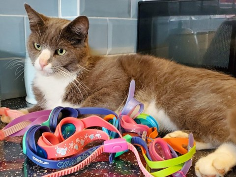 Woman's confusion as cat keeps bringing swimming goggles home