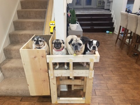 Woman makes DIY stairlift for her elderly rescue pugs