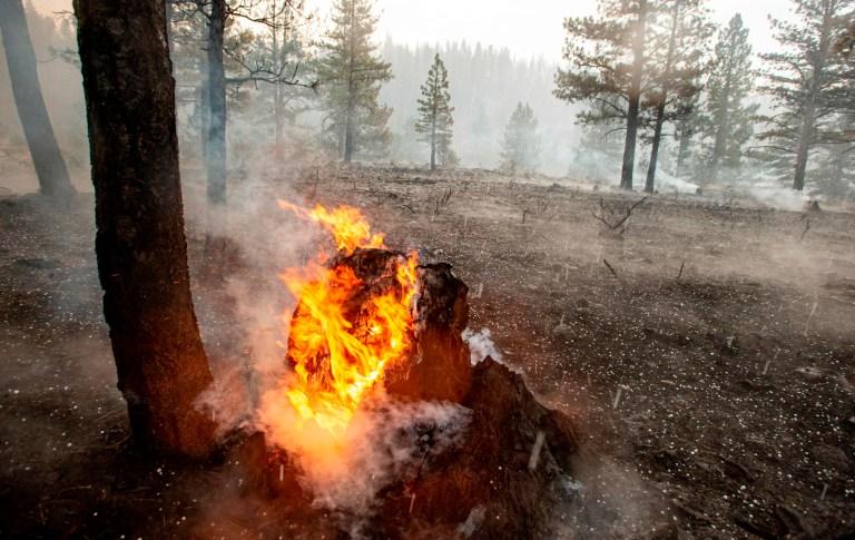 Une souche d'arbre continue de brûler alors que la grêle tombe directement sur le feu de Hog près de Susanville, en Californie, le 21 juillet 2020. - Une cellule d'orage mélangée à une colonne de cendres de pyrocumulus du feu de Hog, entraînant des vents erratiques et des éclairs avant d'évoluer en grêle tempête qui a éteint une partie de l'incendie.