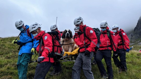 Members of Wasdale Mountain Rescue Team rescuing Daisy the St Bernard which had collapsed while descending Scarfell Pike in the Lake District. PA Photo. Issue date: Sunday July 26, 2020. The team said the dog was displaying signs of pain in her rear legs and was refusing to move as she came down from the summit of the mountain with her owners on Friday evening.