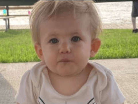 Girl, 1, mauled to death by pit bull that got into her playpen as she slept