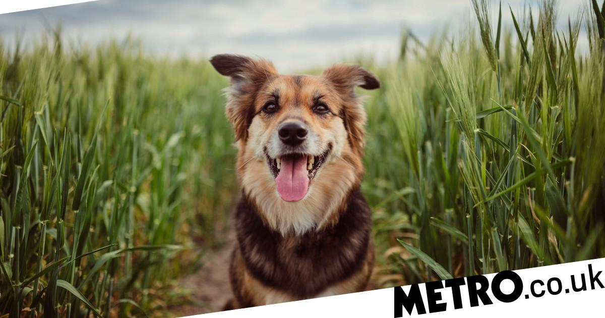 International Dog Day: Can you guess these dog breeds in our quiz?