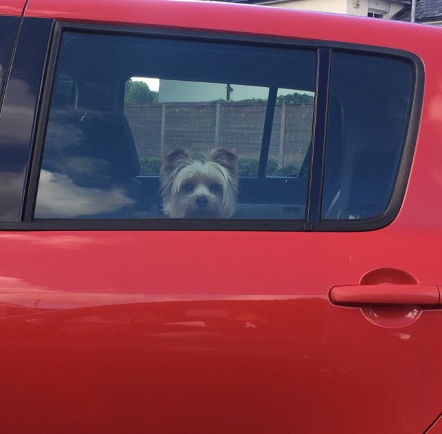 Portrait Of Dog Sitting In Car