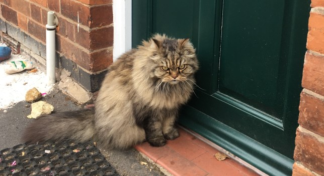 Angry looking cat sitting on a doorstep.