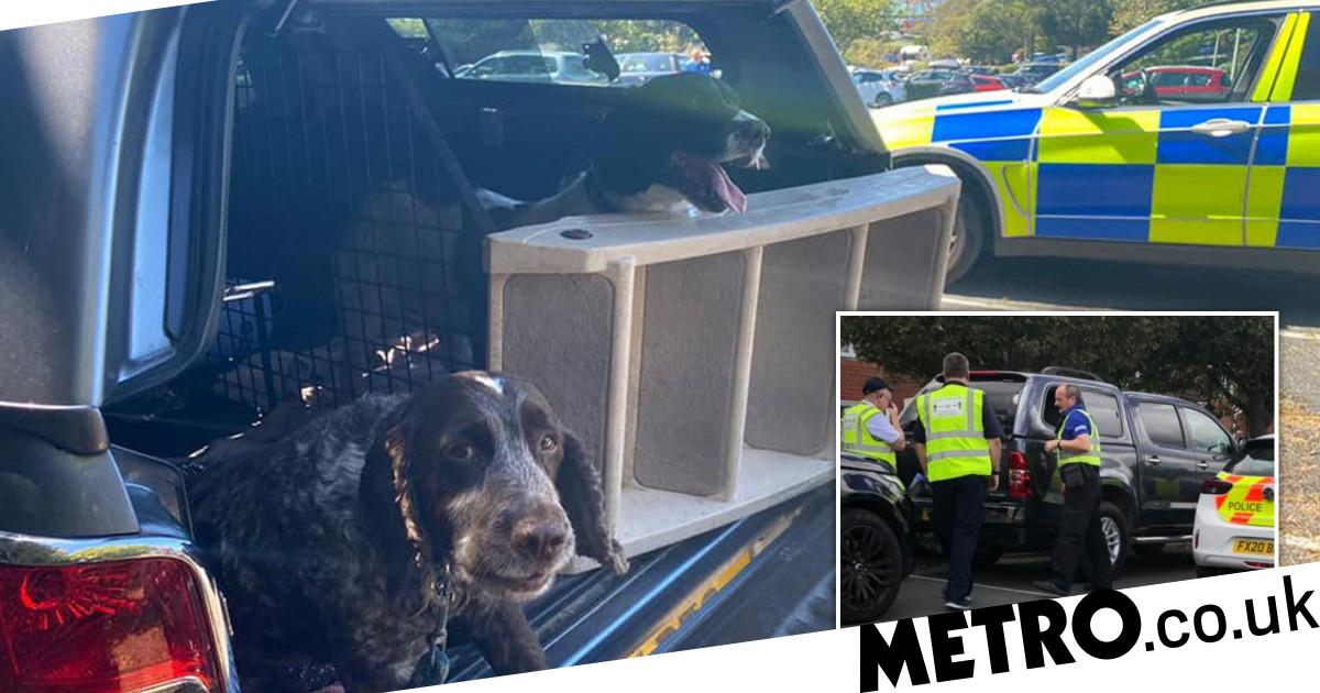 Two dogs left in sweltering hot car while owners went to theme park