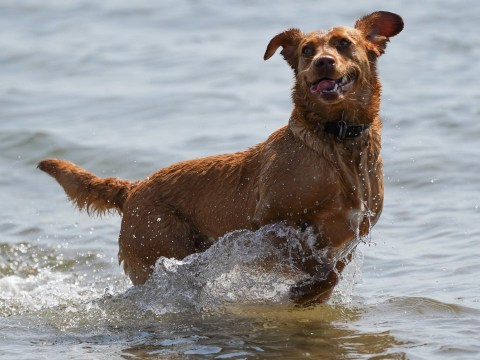How to keep your dog cool during extreme temperatures