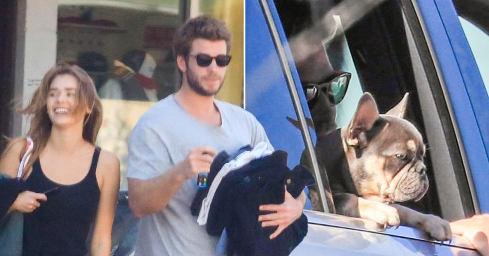 Liam Hemsworth and Gabriella Brooks pictured alongside new French bulldog puppy
