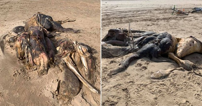 A 15ft creature has washed up on a beach near Liverpool.