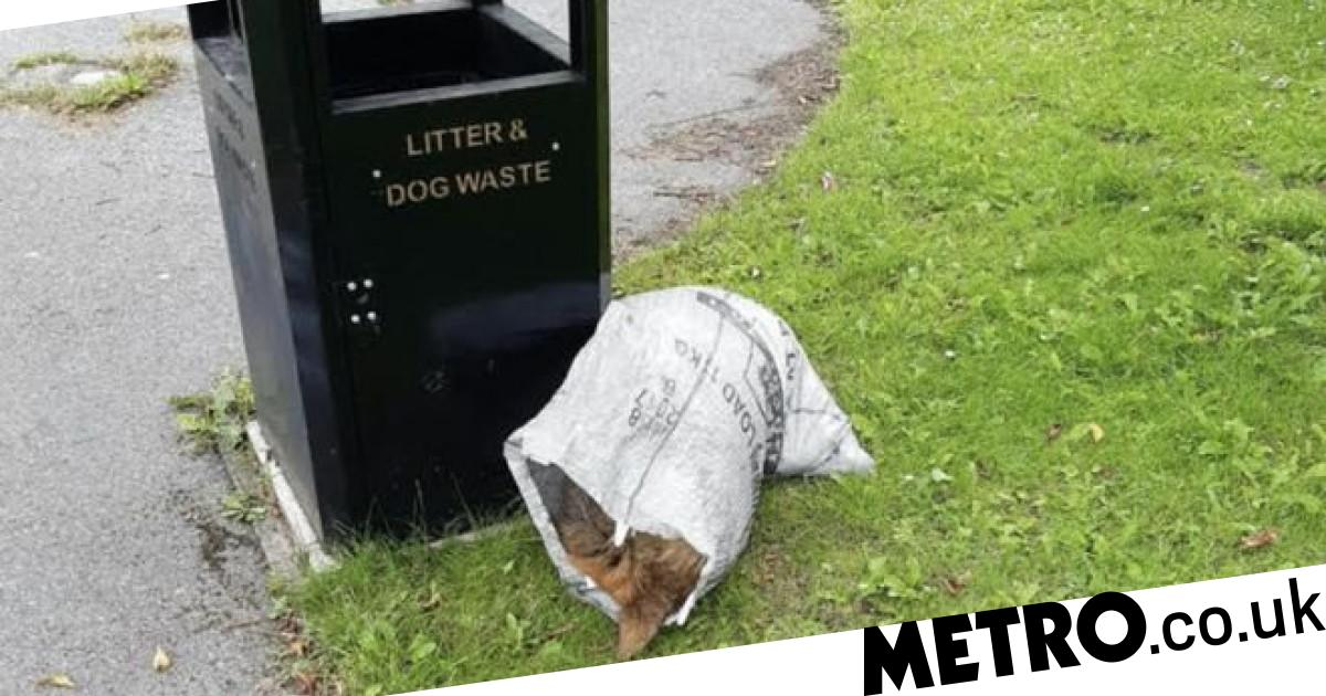 Body of 'healthy' dog found dead inside parcel sack left in park