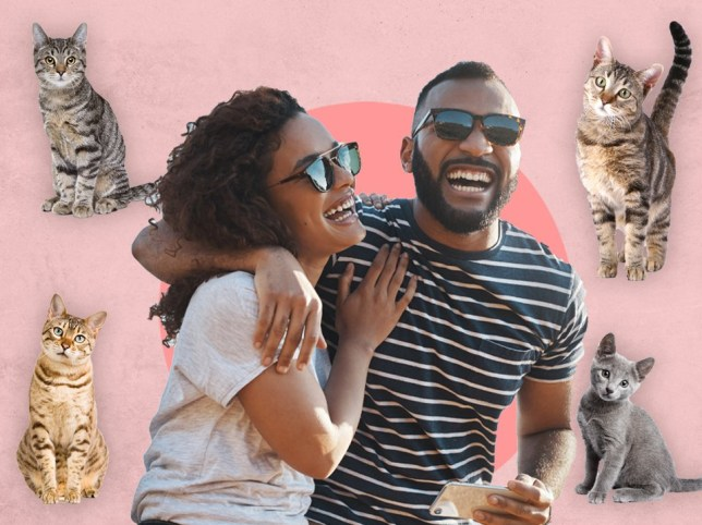 A dating app for cat lovers has launched for International Cat Day pICS: Getty