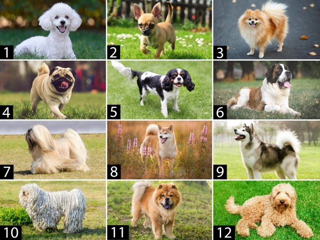 Quiz: Can you guess these dog breeds for international dog day? (Picture: Getty)