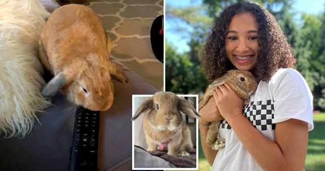 Girl holding pet rabbit