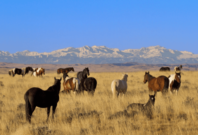 File photo of horses grazing in Wyoming