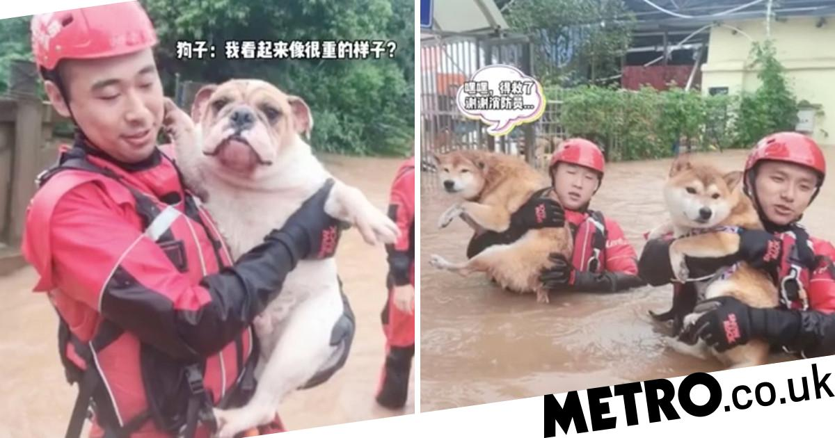 Dogs happy after being rescued from floods in wheelie bins and dinghies