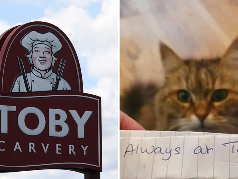 Cat who keeps going to Toby Carvery to beg for food gets busted thanks to a note around her neck