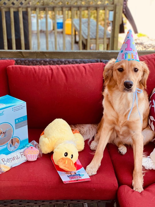 Rikka the dog sitting on a red sofa with her birthday presents and wearing a birthday hat