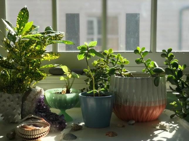 Houseplants in a Window