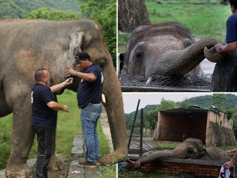 'World's loneliest elephant' given permission to leave zoo for a better life