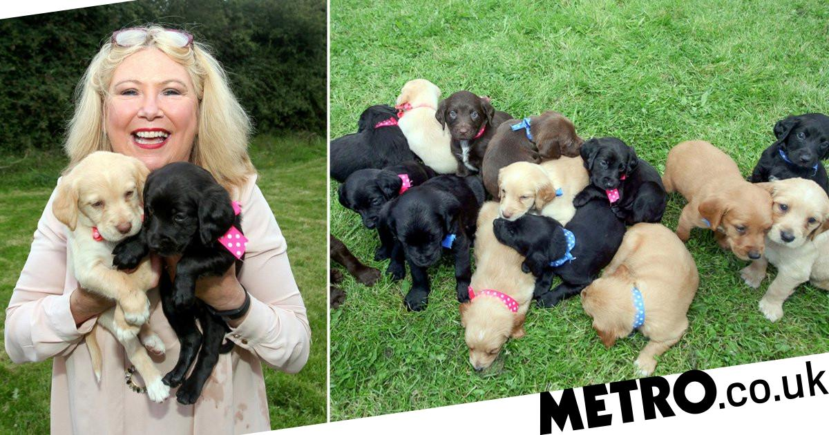 Dog not neutered due to lockdown gives birth to 'largest ever litter'