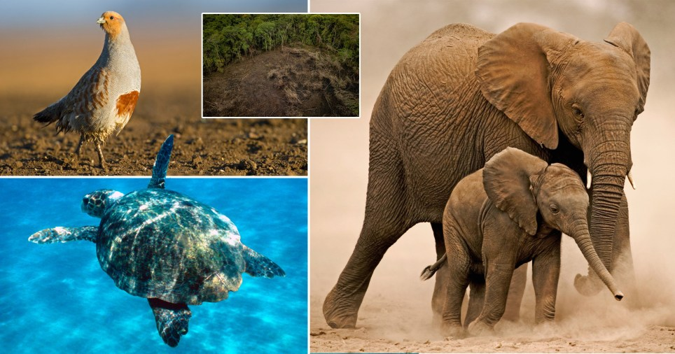 Animal populations have been declining dramatically, the WWF said