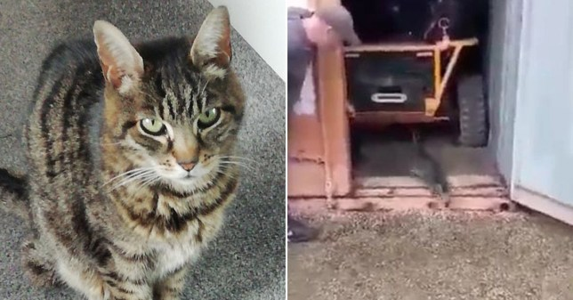 Monty the cat and the shipping container he lived in