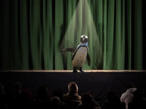 Struggling comedians slam McVitie's after company asks for free Penguin jokes