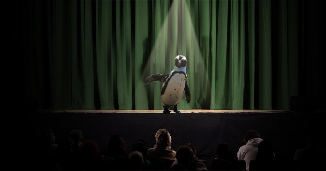 A penguin stands beneath a single spotlight in front of a green stage curtain