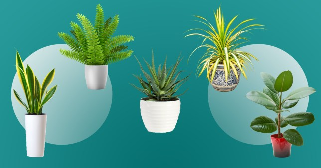 Which houseplants are the most popular on Instagram?