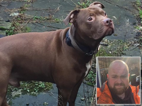 Man died after 'loyal' dog attacked him when he passed out during epileptic fit