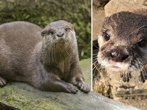 Lonely otter Harris finds love through online dating site built just for him