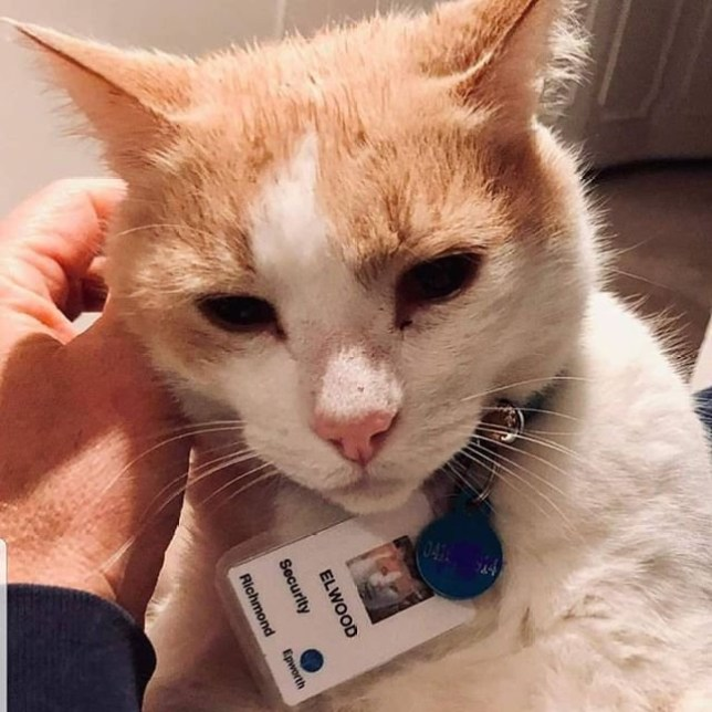Cat hangs around hospital until they give him a job