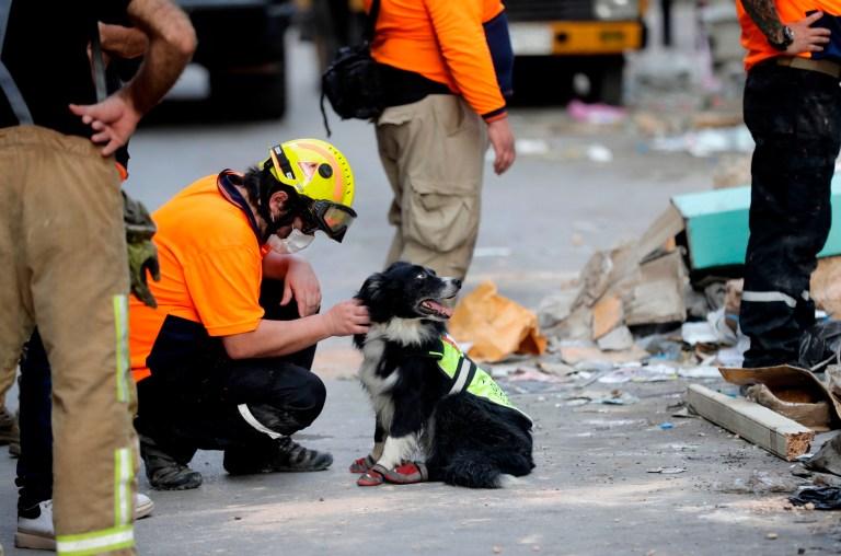 Un secouriste chilien caresse un chien renifleur alors que d'autres creusent les décombres d'un bâtiment gravement endommagé dans la capitale libanaise Beyrouth, à la recherche d'éventuels survivants d'une méga-explosion dans le port adjacent il y a un mois, après que des scanners ont détecté une impulsion, en septembre. 3, 2020.