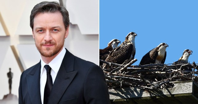 James McAvoy's series probed by police after disturbing birds pics: Getty