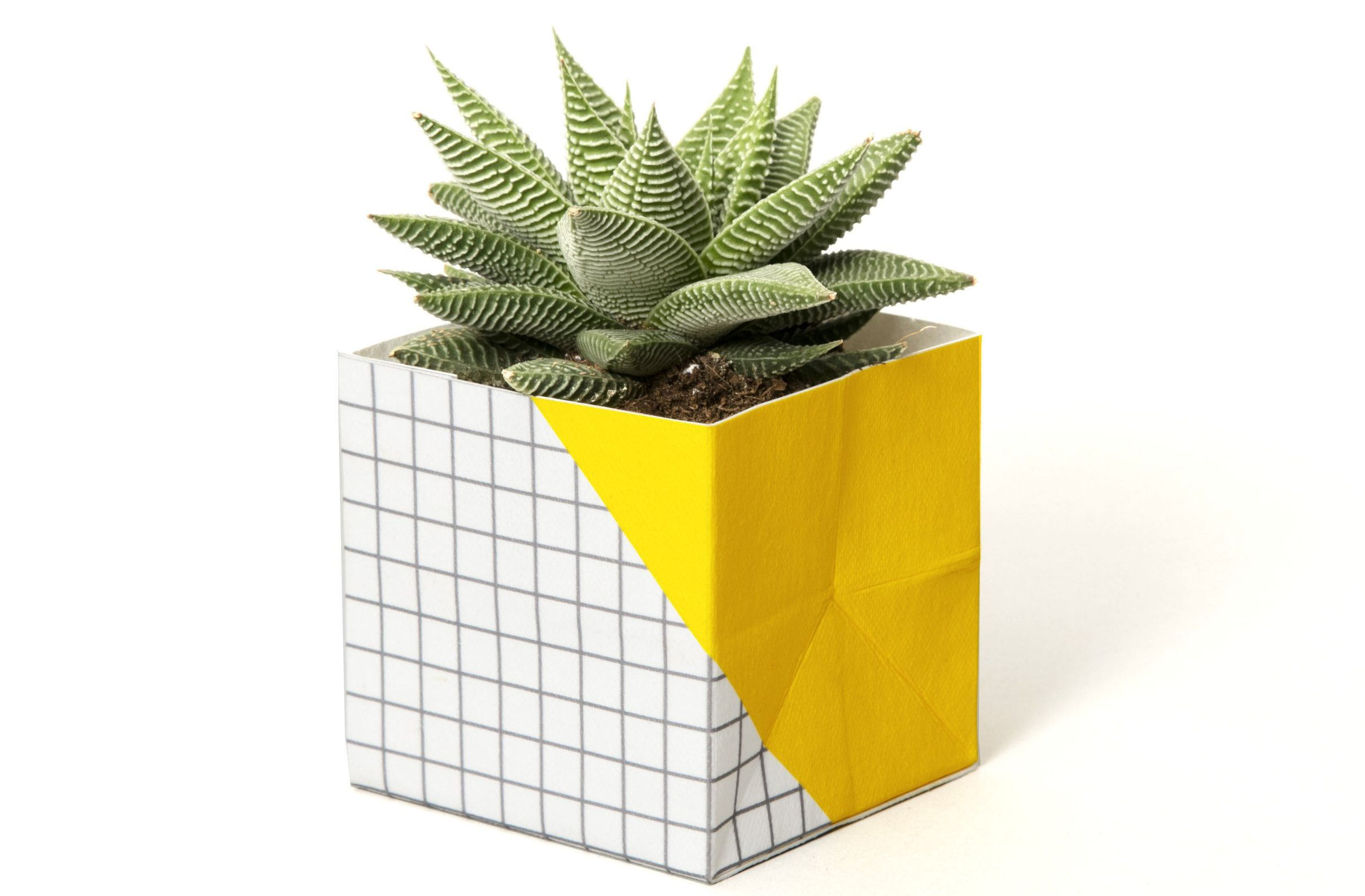 Small Plant Cover, £8, Block Design. Buy it with the Ownable app.