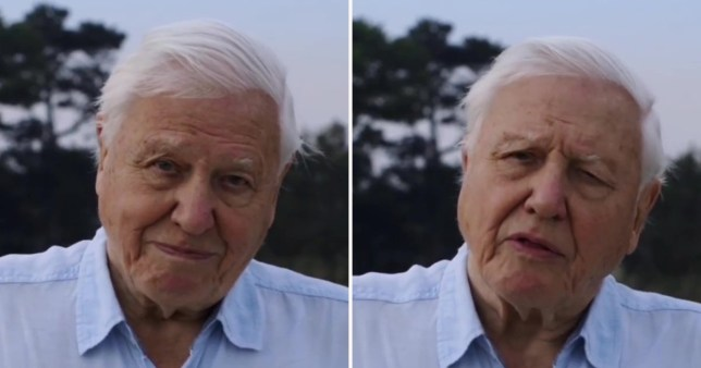 David Attenborough breaks Guiness World Record for fastest time to reach 1m Insta followers