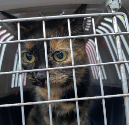 Cat which drove an entire town crazy is finally rescued