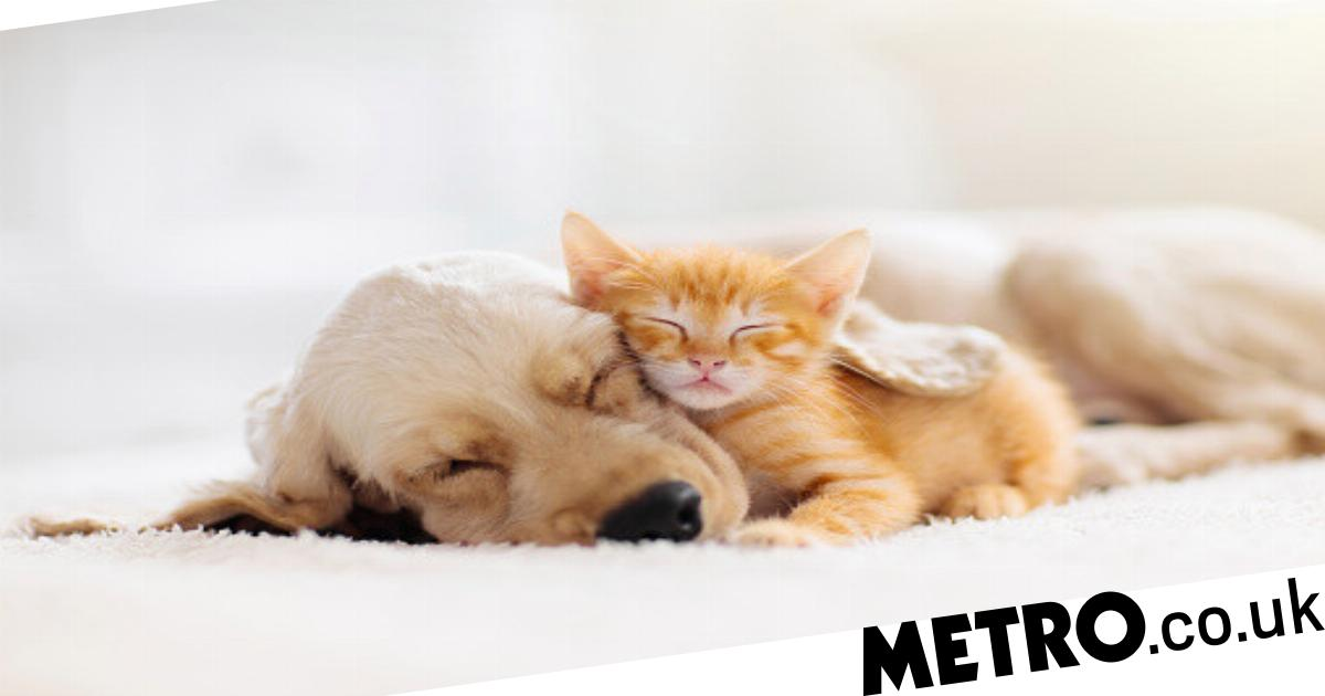 These are the most popular puppy and kitten names in 2020