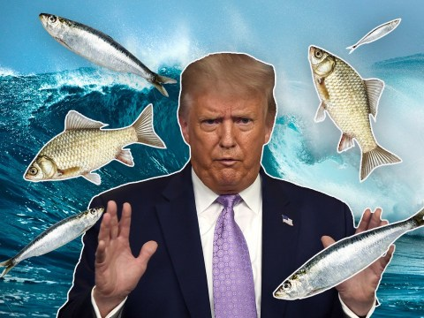 Steroid-pumped Donald Trump goes on bizarre TV rant about fish not having enough water