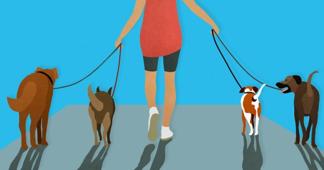 illustration of person walking dogs