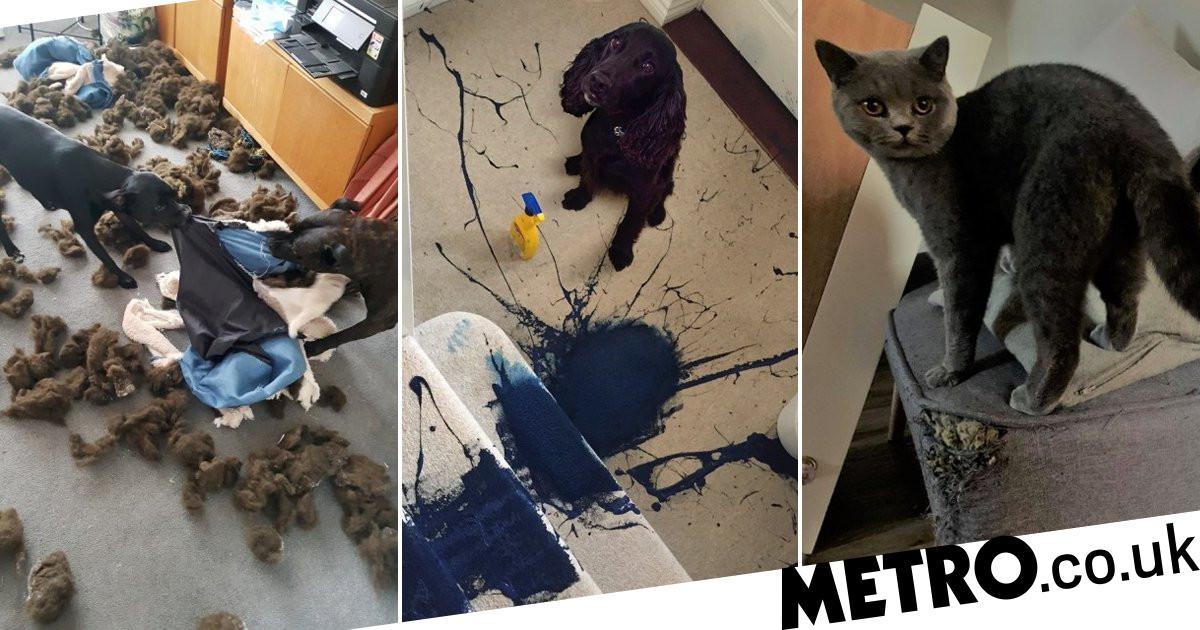 Dog named nation's most destructive pet after destroying carpet