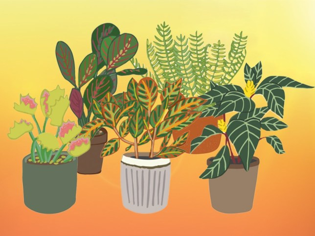 Top ten house plants Brits are most likely to kill