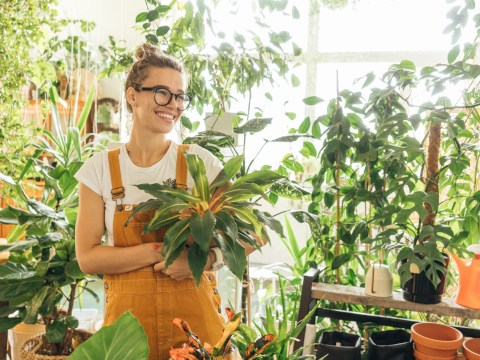 How houseplants can help boost your mental health and wellbeing over winter