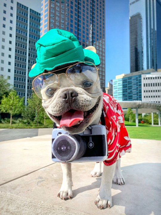 Toad the dog tourist halloween costume