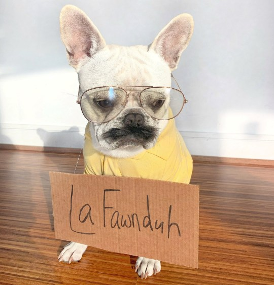 Toad the dog dressed as Kip from Napoleon Dynamite